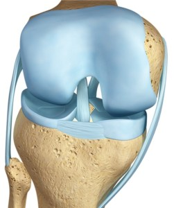 cartilago-rodilla-normal